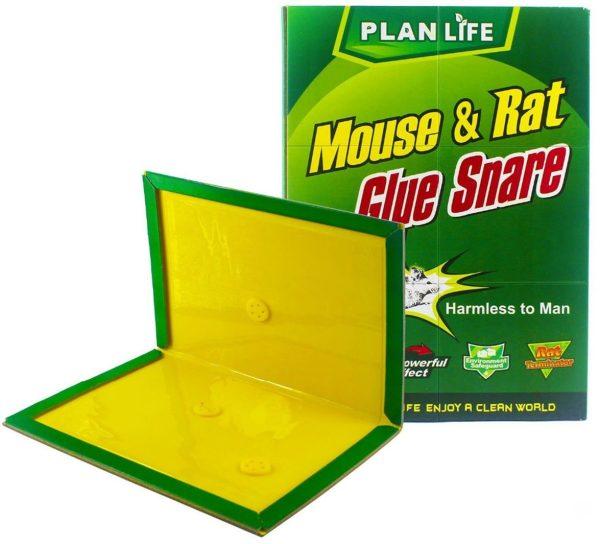 pułapka klejowa na myszy