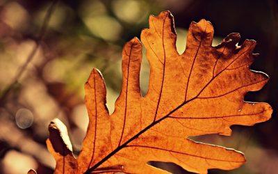 Co robić jesienią? Jak spędzać wieczory? – nasze sposoby